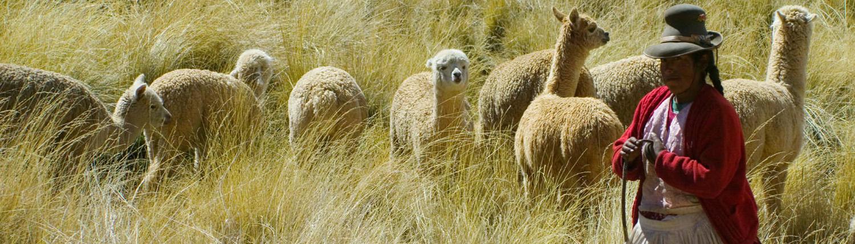 sierra-alpacas